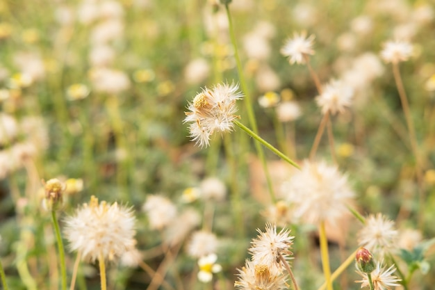 Table fleur d'été