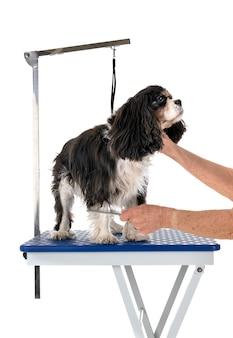 Table de toilettage et petit chien