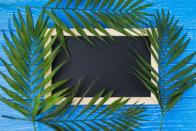 Tableau noir et feuilles de plantes à bord