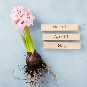Tags de mois de printemps avec racine de jacinthe