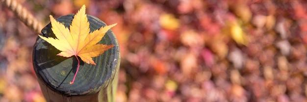 Taille de la bannière panoramique de la feuille d'érable japonaise sur le motif du bois