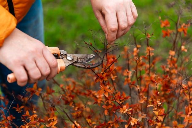 Taille de printemps des branches et des arbustes