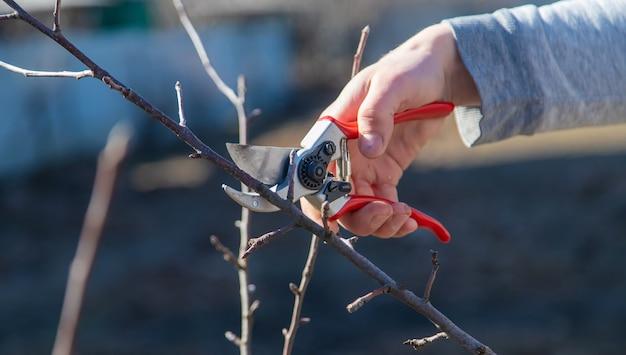 Tailler des branches avec un sécateur