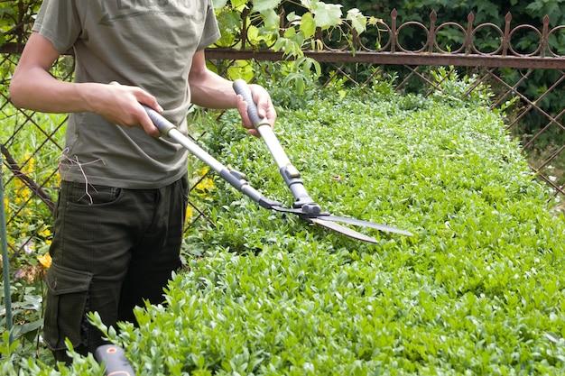 Tailler les buissons dans le jardin avec de grands cisailles de jardin