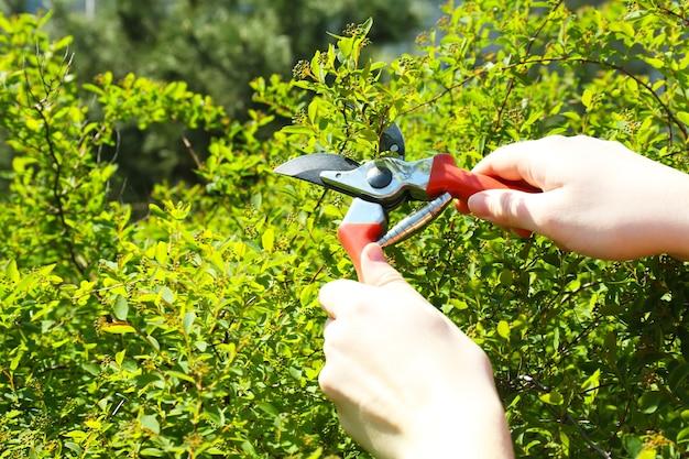 Tailler les buissons dans le jardin
