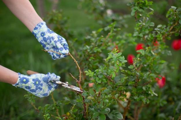 Tailler et couper des plantes dans un jardin au printemps