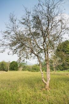 Tamarine dans un jardin agricole