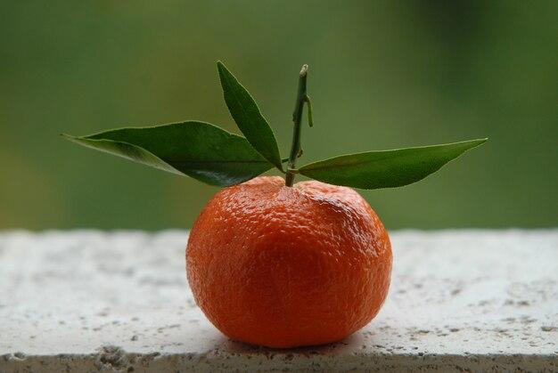 Tangerine, jardin extérieur