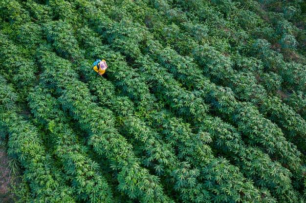 Tapioca farm et un agriculteur pulvérisent de l'herbe morte sur des terres agricoles