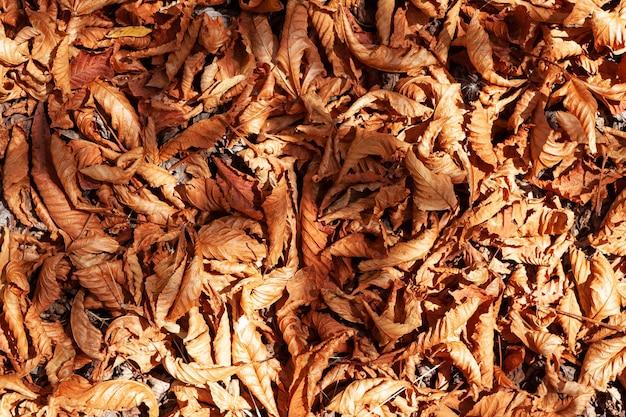 Tapis d'automne lumineux de feuilles tombées feuillage sec dans les rayons du soleil sur la surface de la terre