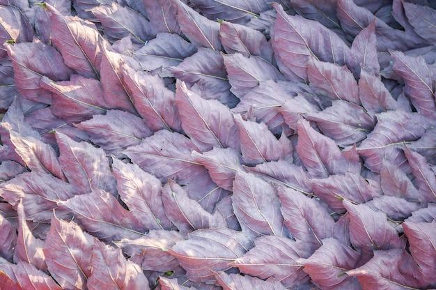 Tapis de feuilles sèches. vue aérienne de feuilles sèches. fond d'automne