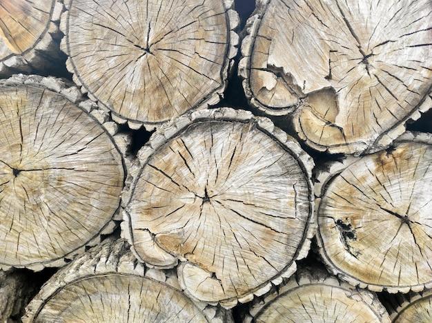 Tas d'arbres coupés, pile de bois de chauffage, motif d'arbre.