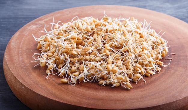 Tas de blé germé sur une planche en bois brune, se bouchent.