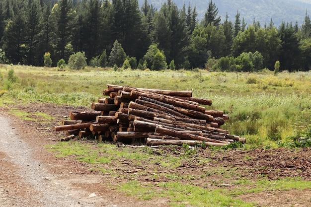 Tas de bois de chauffage dans le parc avec de beaux arbres verts