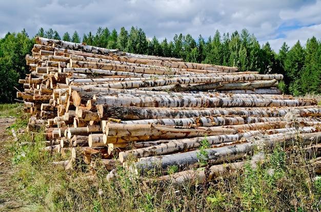 Tas de bois récolté de bouleau, pin, tremble sur fond de forêt verte et ciel bleu
