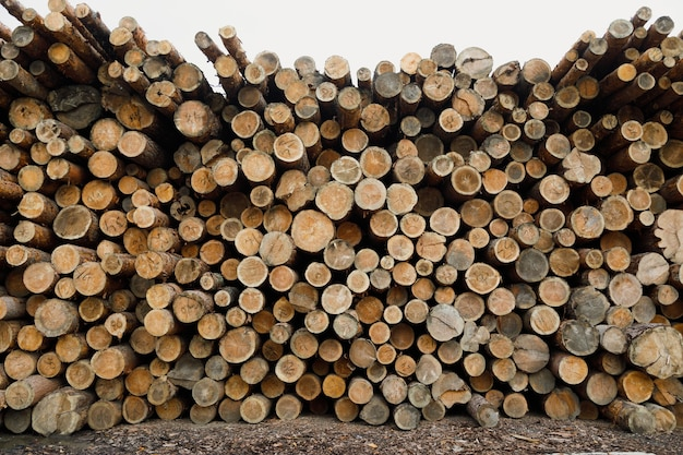 Tas de bûches de bois. site d'exploitation forestière.