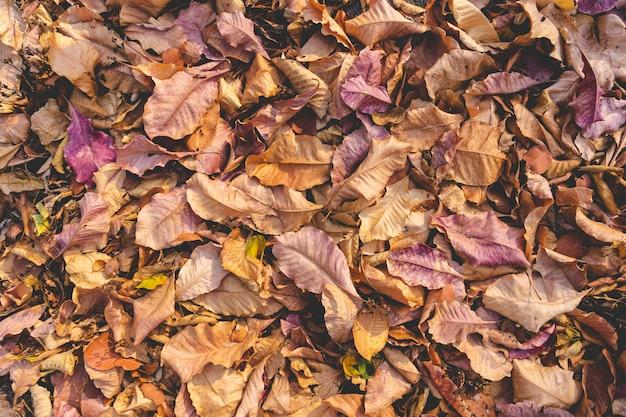 Tas de chute automne séché laisse la texture pour le fond