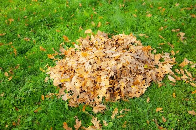Un tas de feuilles de chêne sèches d'automne sur une pelouse d'herbe verte recueillie par un concierge.