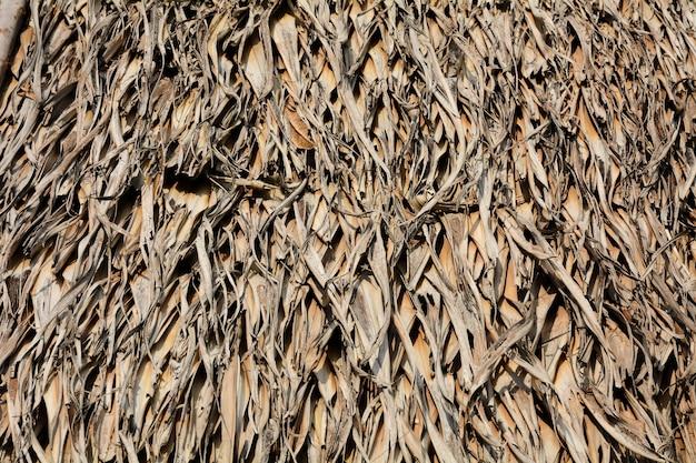 Tas de feuilles de palmier sèches brunes