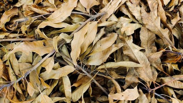 Tas de feuilles sèches brunes dans le parc
