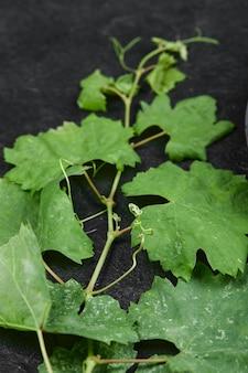 Un tas de feuilles de vigne sur fond noir. photo de haute qualité