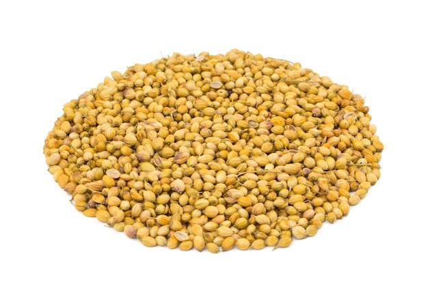 Tas de graines de coriandre séchées ou dhaniya sur fond blanc