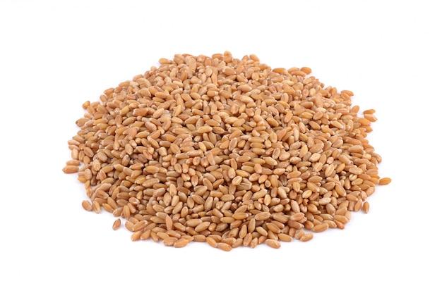 Tas de grains de blé, se bouchent.