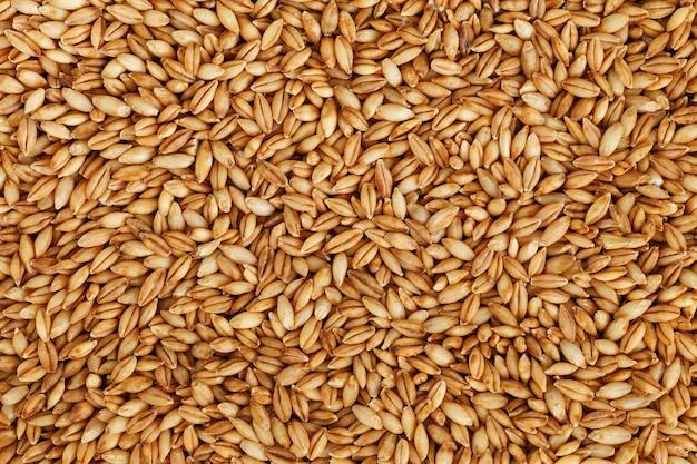 Tas de grains d'orge perlé, nourriture végétarienne