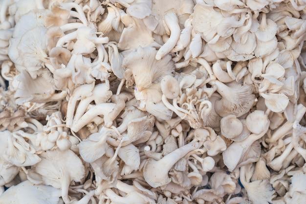Tas d'huîtres indiennes fraîches, champignons phoenix ou huîtres pulmonaires