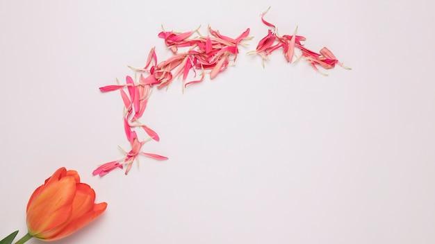 Tas de pétales de fleurs roses près de la floraison