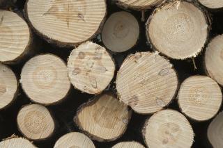 Tas de poteaux de bois