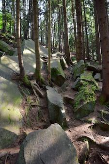 Un tas de rochers empilés recouverts de mousse verte et de branches dans une forêt dense