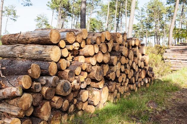 Tas de troncs de pin coupés