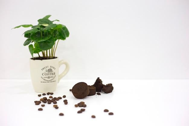 Tasse blanche avec du café germé, des grains de café et du café moulu pressé sur fond blanc