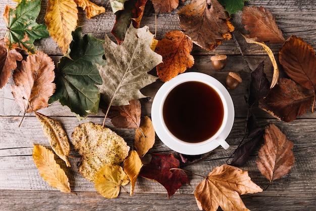 Tasse de café dans les feuilles