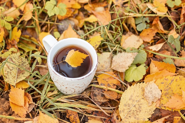 Tasse de thé sur feuillage jaune. balade dans la forêt d'automne - image