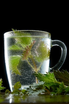 Tasse de thé d'ortie médicinale avec des feuilles d'ortie et de la poussière d'eau sur fond noir