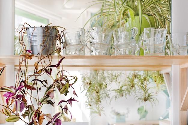 Tasses et plantes d'intérieur debout sur une étagère