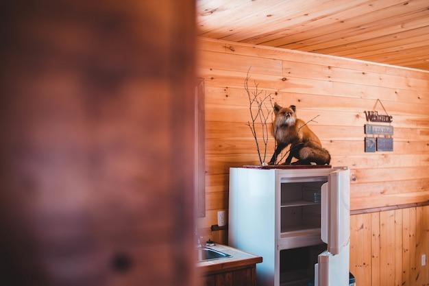 Taxidermie du renard brun sur le dessus du réfrigérateur blanc