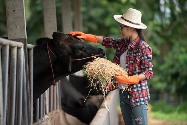 Technicien vétérinaire nourrir les vaches à la ferme
