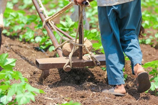 Technique agricole indienne