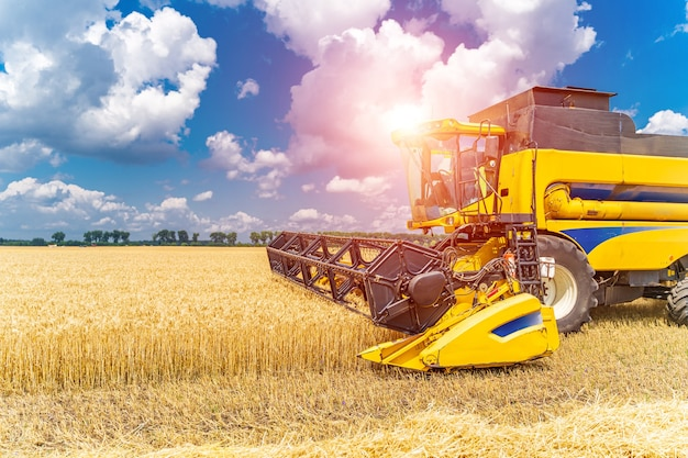 Techniques d'agriculture lourde dans le domaine. récolte de la récolte. blé sec. ciel bleu au-dessus.