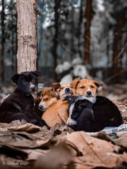 Teckels trois chiens colorés