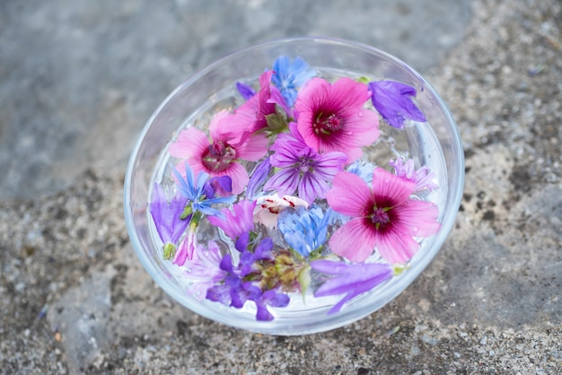 Teintures végétales et fleurs