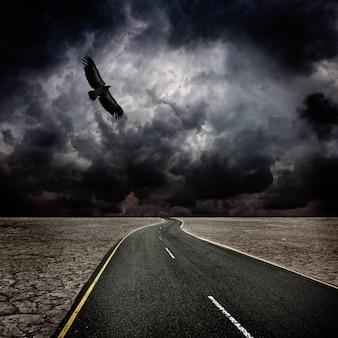 Tempête, oiseau, route dans le désert