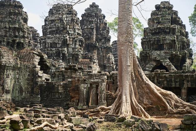 Temple et arbres d'angkor wat
