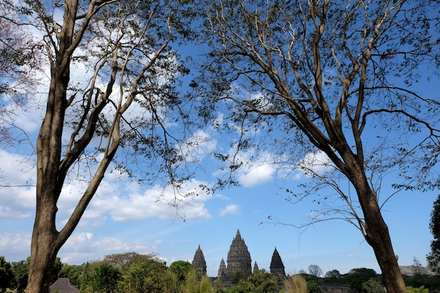 Temple de prambanan avec fond de ciel bleu et arbres en premier plan, un temple hindhu à yogyakarta, indonésie.