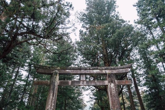 Temple de torii japon sanctuaire en forêt