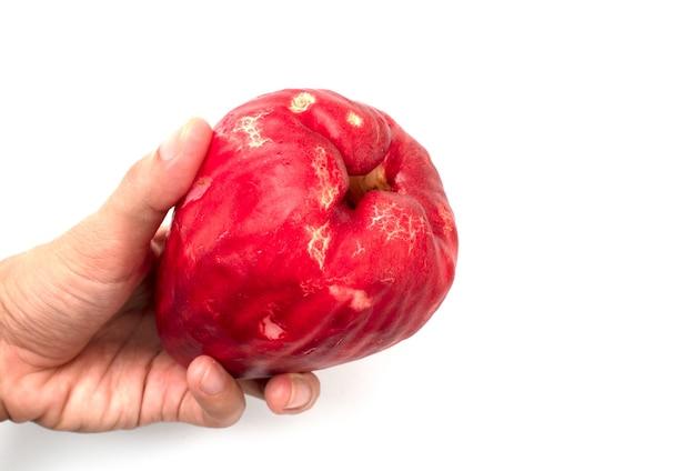 Tenant un fruit de goyave rouge sur fond blanc