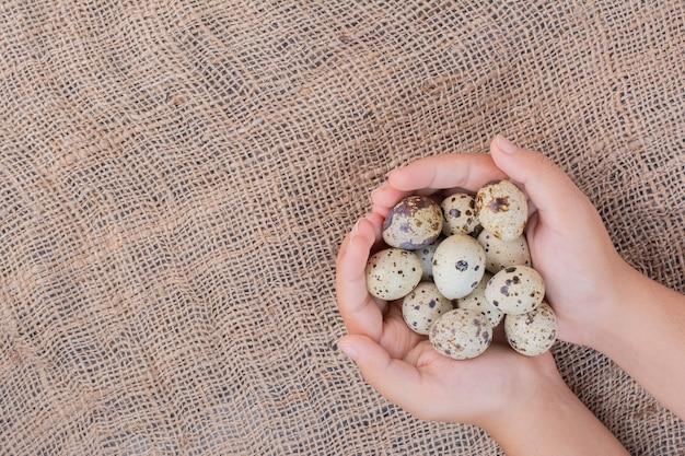 Tenant des œufs biologiques dans la main.